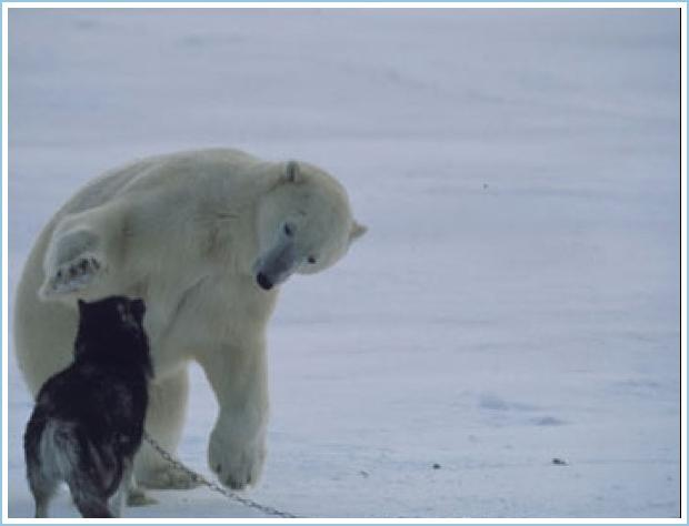 Pictures Of A Polar Bear Hugging A Dog