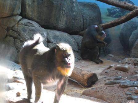 Staten Island Zoological Society